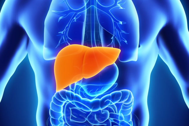 Getting to know your liver