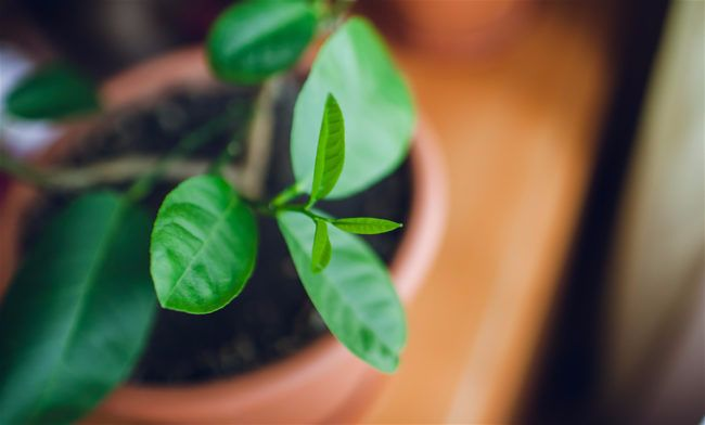 Your health & houseplants