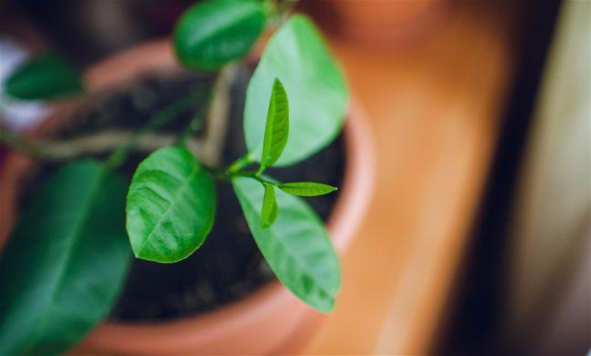 health and houseplants blog